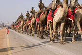 Camel Corps on the March — Stock Photo
