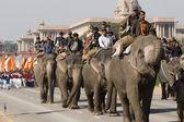 Elephants on Parade — Stock Photo