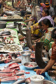 Indian Fish Market — Stock Photo