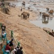 Pinnawela Elephant Orphanage — Stock Photo #8283451