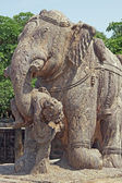 War Elephant — Stock Photo