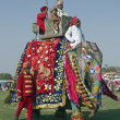 Jaipur Elephant Festival — Stock Photo