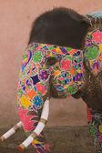 Painted Elephant — Stock Photo