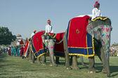 Elephant Festival — Stock Photo