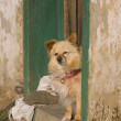 Dog on Porch — Stockfoto #8959755