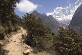 Trekking en las montañas del himalaya — Foto de Stock