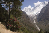 Trekking no himalaia — Foto Stock