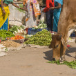 Indian Street Scene - Stockfoto