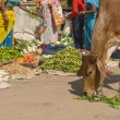 Indian Street Scene - 