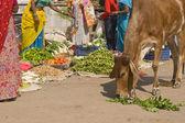 Indian Street Scene — Stock Photo