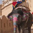 Stock Photo: Decorated Elephant