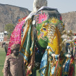 Постер, плакат: Decorated Indian Elephant
