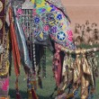 Decorated Indian Elephant — Stock Photo