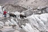 氷河横断 — ストック写真