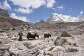 Himalayan transportu — Zdjęcie stockowe