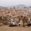 Pushkar Fair — Stock Photo #9147931