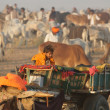 Stock Photo: Home is Camel Cart