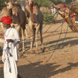 Indian Man and Camels — Stock Photo