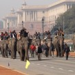 Stock Photo: Elephants In Delhi