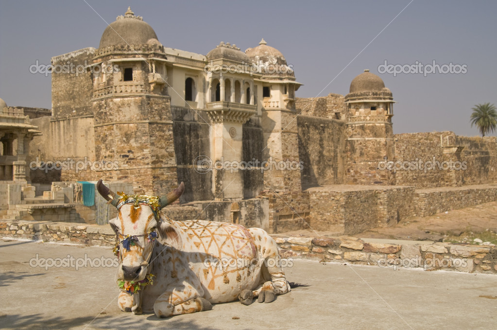 Decorated holy cow lying in front of an ancient ruined palace ((Pratap Palace). Chittaugarh, Rajasthan, India  Stockfoto #9201033