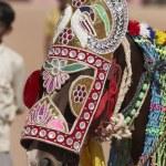 Decorated Horse — Stock Photo