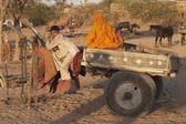Camel Cart — Stock Photo