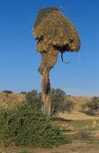 Vogel nest — Stockfoto