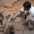 Man Feeding Monkeys - Stock Photo