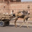 Stock Photo: Camel Cart