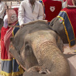 Mahout and Elephant - Stock Photo