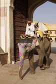 Elephant at Amber Fort — Stock Photo