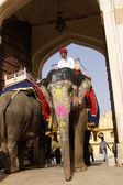 Working Elephant at Amber Fort — Stock Photo