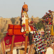 Camel Salute At The Jaisalmer Desert Festival — Stock Photo