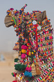 Decorated Camel — Stock Photo