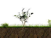 Small plant in soil section — Stock Photo