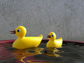 Ducks in water — Stock Photo