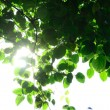 Sunshine Behind Leaves — Stock Photo