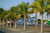 Coconut-trees — Stock Photo