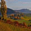 Autumn in vineyards - Lizenzfreies Foto
