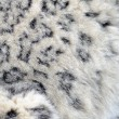 Snow leopard fur — Stock Photo #9642657