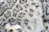 Snow leopard fur — Stock Photo