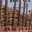 Foto Stock: Cargo of Spruce Logs at Dockside