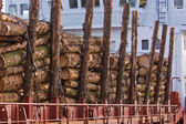 Cargo of Spruce Logs at Dockside — Stock Photo