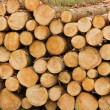 Woodyard Pile - Stock Photo