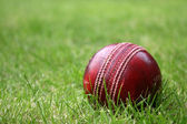 Cricket Ball — Stock Photo