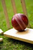 Cricket — Stock Photo