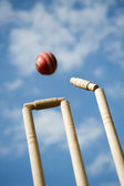 Cricket Stumps — Stock Photo