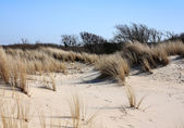 Dunes near Dutch coast. — Stock Photo