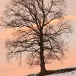 Tree Outlined Against a Sunrise Sky — Stock Photo