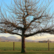Dormant Winter Tree — Stock Photo